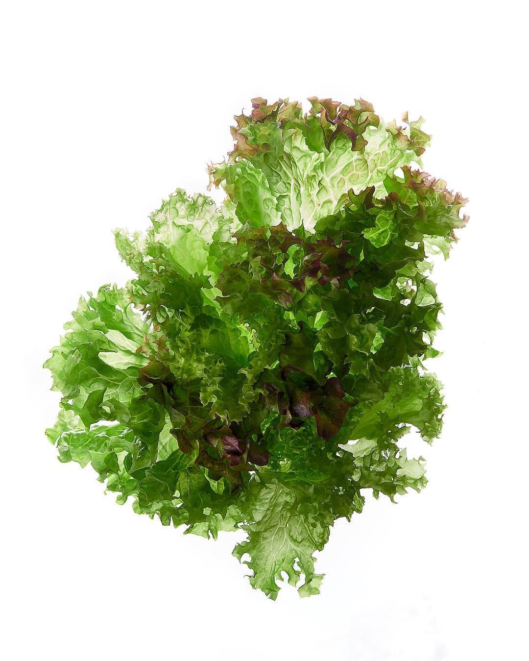 Салат Трио-микс - ассорти листовых салатов