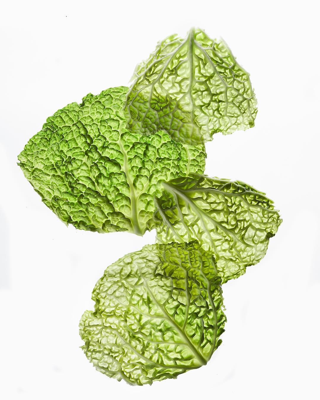 Листья савойской капусты
